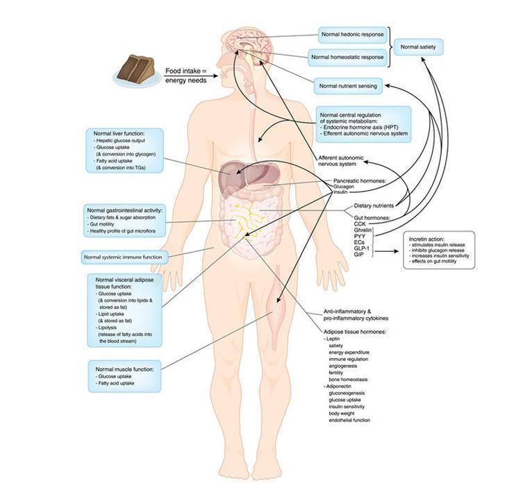 3 способа похудеть без диет