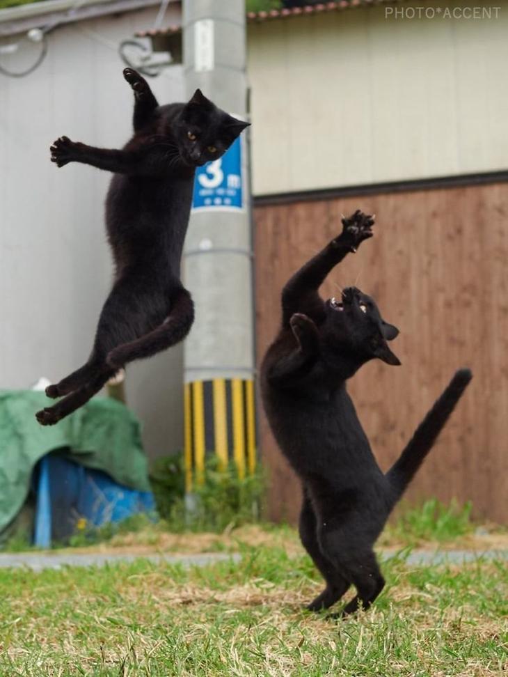 Японский фотограф посвятил свою жизнь съемкам кошек-«ниндзя» животные, коты, коты ниндзя, ниндзя, фотограф