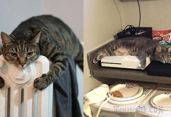 17 примеров: умная кошка мерзнуть не будет