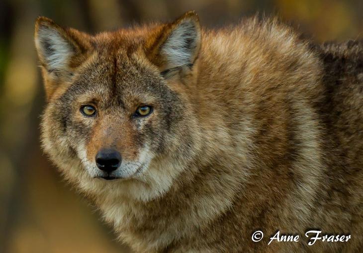 18 гибридных животных, в существование которых трудно поверить-5
