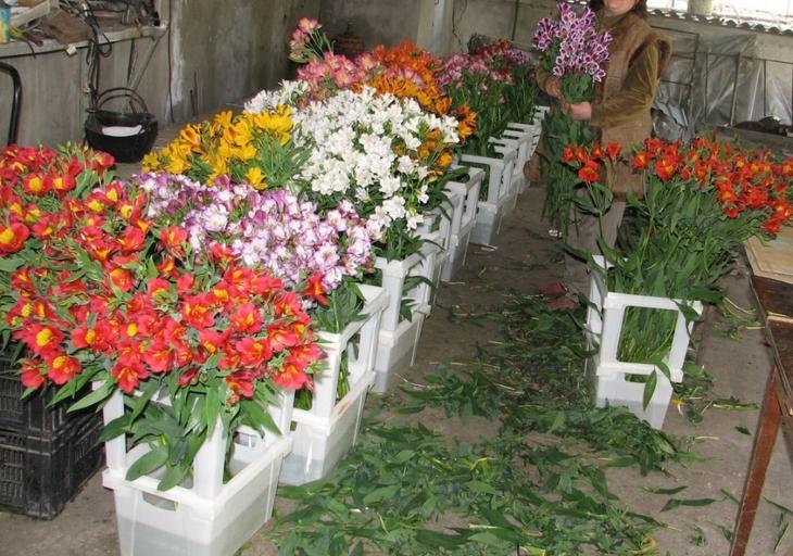 бизнес цветочные теплицы