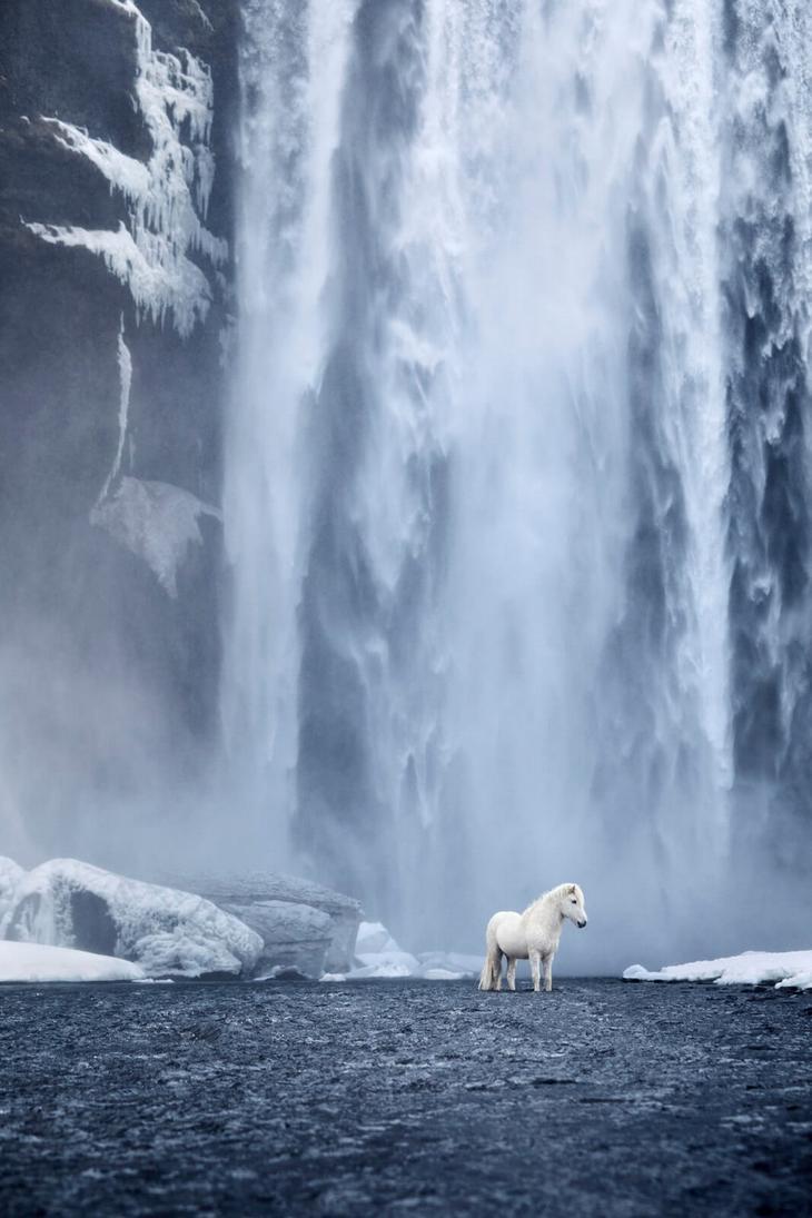 loshadi-Islandii-fotograf-Dryu-Doggett 11