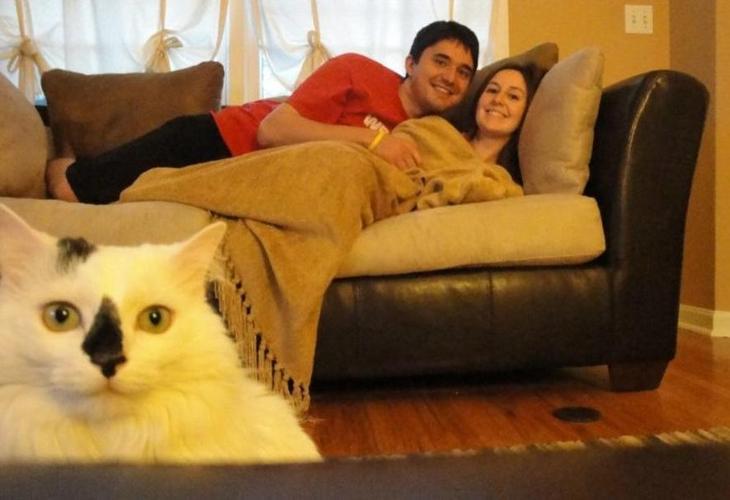 Кошки в кадре - 21 фотобомба