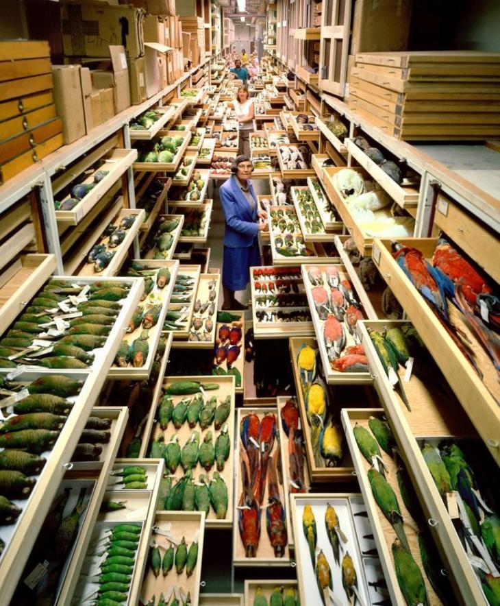 Секретные коллекции Американского музея естественной истории. Только посмотрите на это!