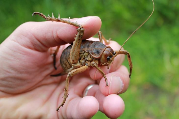8 необычайно огромных насекомых планеты