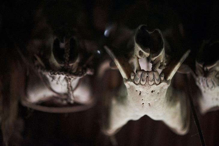plemena na fotografijah adama kozela-36