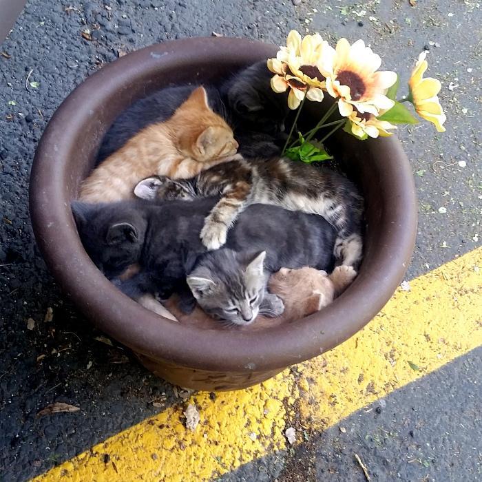 17 уморительных снимков, доказывающих, что коты - самые «уставшие» существа на Земле