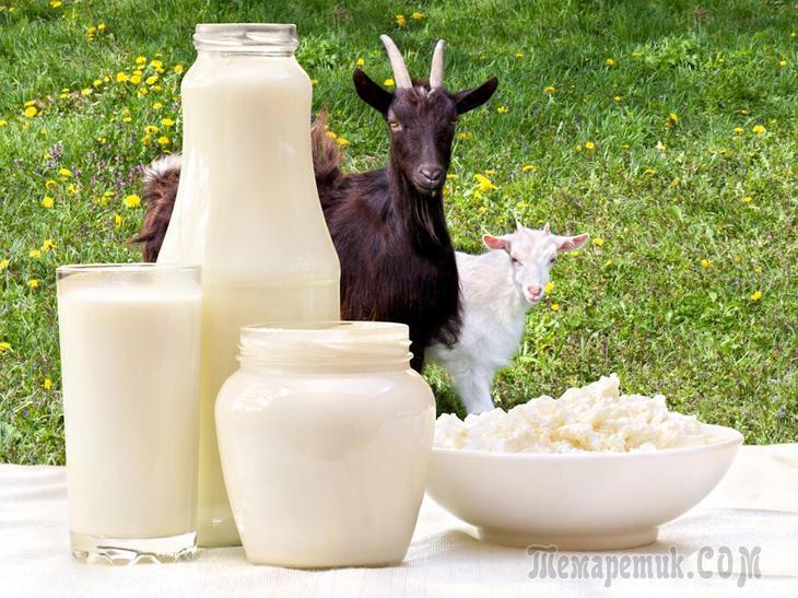Лечение гастрита козьим молоком