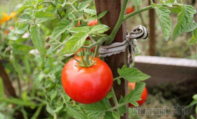 Народные средства для подкормки помидоров  самые лучшие рецепты - Садоводка