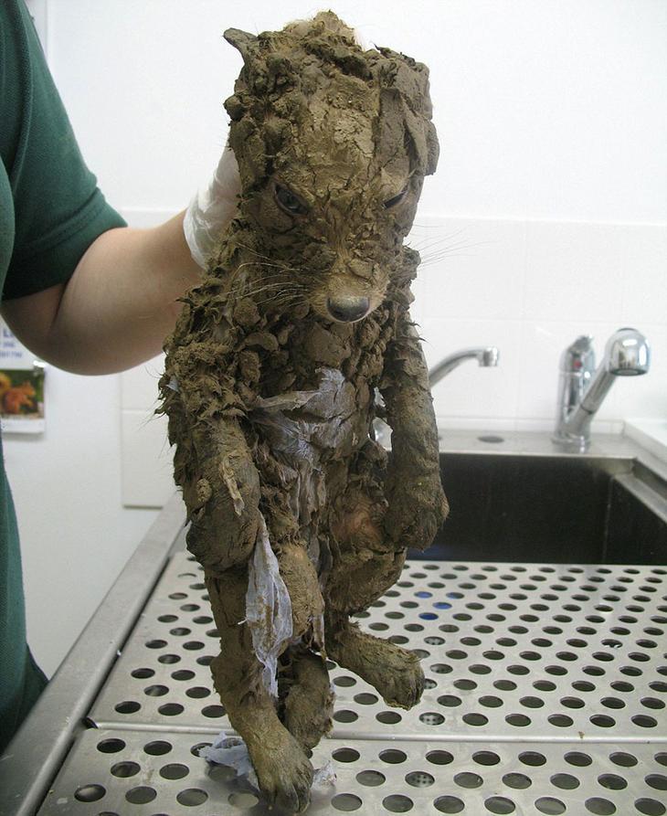 Даже ветеринары не смогли понять, кто это, пока не отмыли