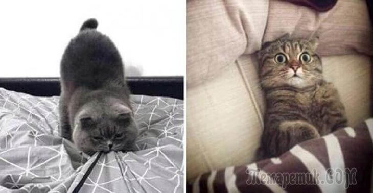 Потрясающие фото, в которых отображена вся суть характера котов