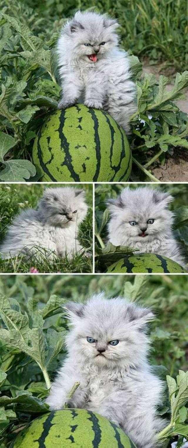 Зловещие котята, с которыми лучше не связываться