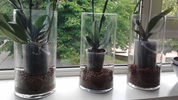 Орхидея после покупки