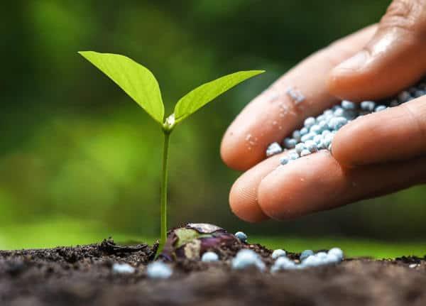 Чем подкормить огурцы для роста в открытом грунте