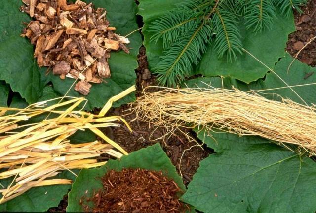 Подробно о мульчировании почвы