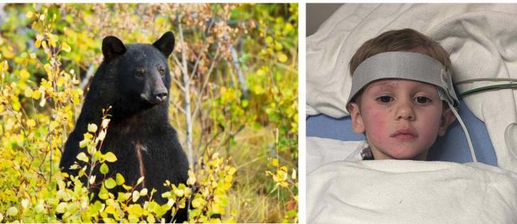 Медвежья услуга: огромный зверь бережно охранял 3-летнего мальчика, который заблудился в лесу