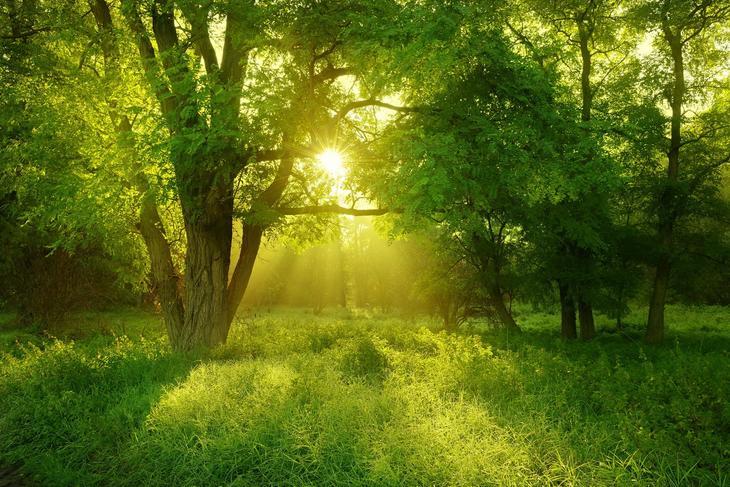 Как заряжаться от деревьев. Целебная сила дерева. Как деревья нас лечат. Фото с сайта NewPix.ru