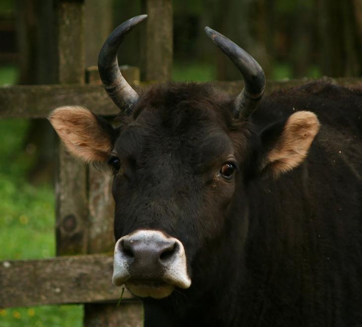 18 гибридных животных, в существование которых трудно поверить-18