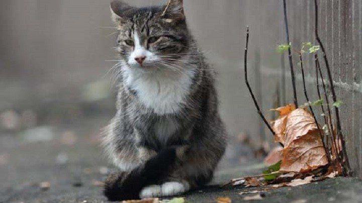 Кот две недели ждал хозяйку, которая попала в больницу
