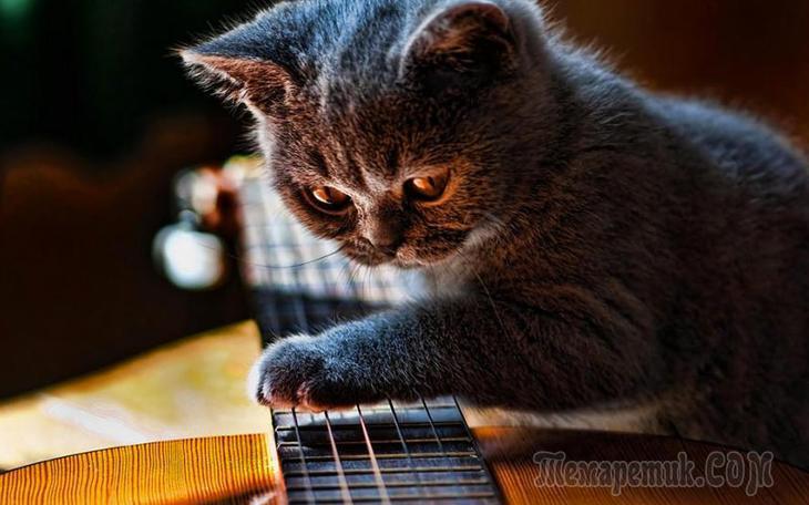 Кошка всегда способна доказать, что не зря ест свой хлеб…
