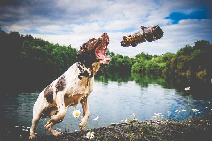 Фотографии собак - 7