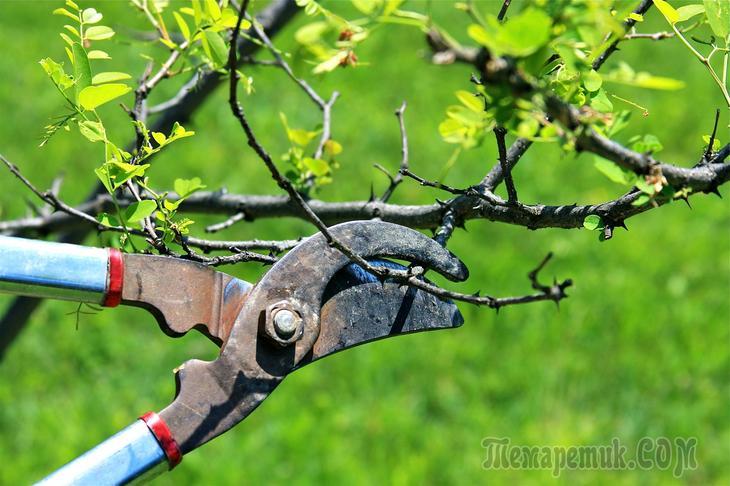 Чистый сад для обработки сада инструкция по применению достоинства и преимущества