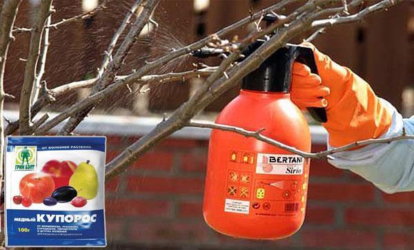 Медный купорос (сульфат меди): применение в садоводстве и на огороде, как разводить, приготовить раствор для обработки томатов, картофеля