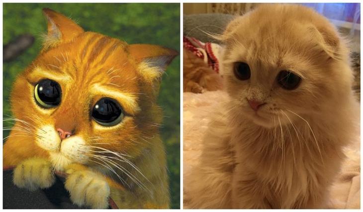 Когда не похож, но всё равно пытаешься! до слёз, животные, коты, кошки, питомцы, ржач, смех, юмор