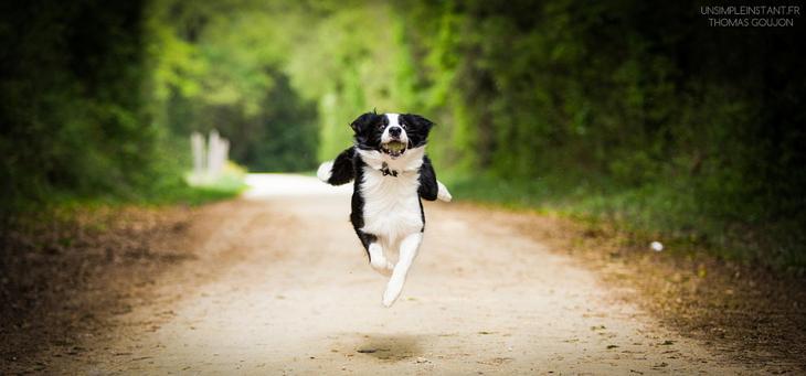Фотографии собак - 9