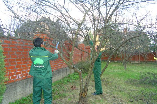 От чего зависит урожай плодовых деревьев
