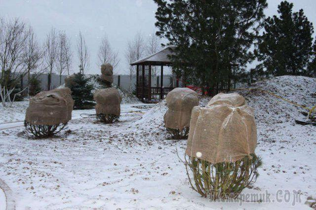 Лучшие материалы для зимнего укрытия растений