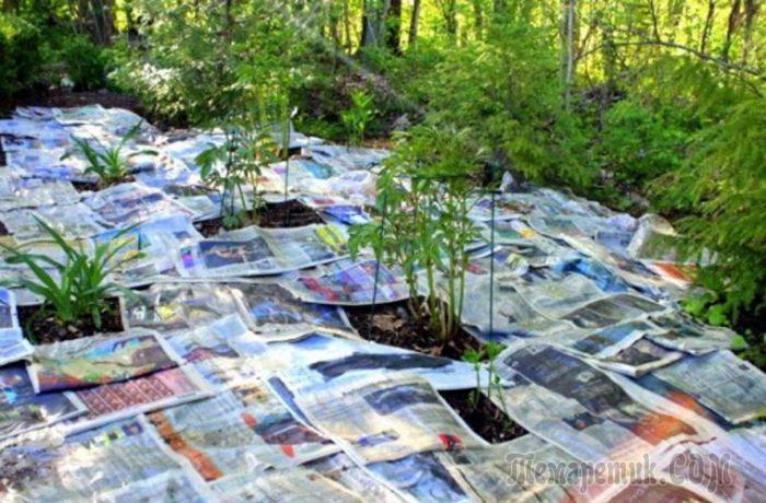 Зачем дачники раскладывают по грядкам газеты, или 9 способов упростить садоводство