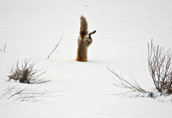 amazing-fox-photos-28