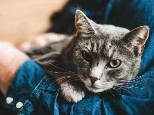 6 причин, по которым кошки спят на человеке