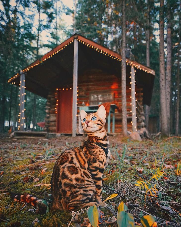 Невероятной красоты кисик из Канады путешествует по всему миру в мире, животные, кот, красота, природа, путешествие