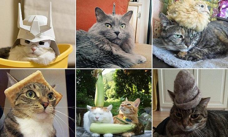 Коты в шляпках - смешнее не бывает! животная мода, животные, животные и люди, коты, показ мод, смешно, фото, шляпки