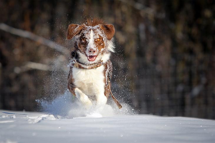 Фотографии собак - 1