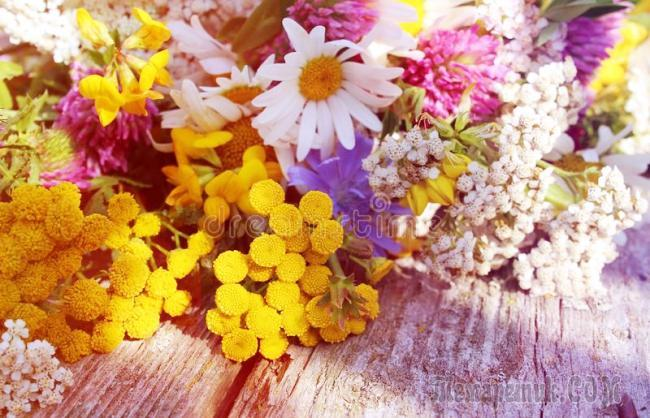 Полевые цветы (Стих)