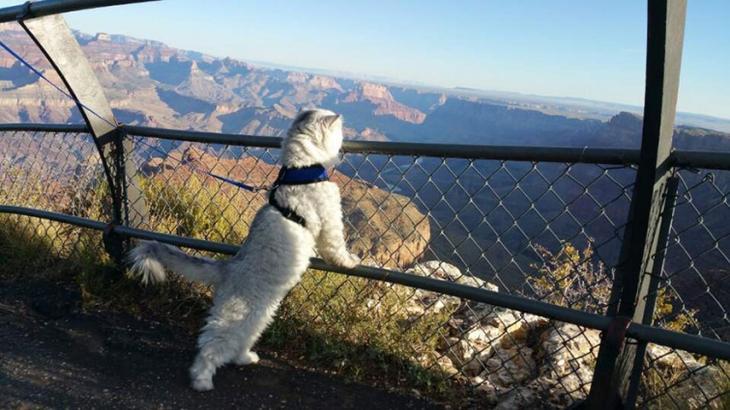Гэндальф  кот, кот-путешественник