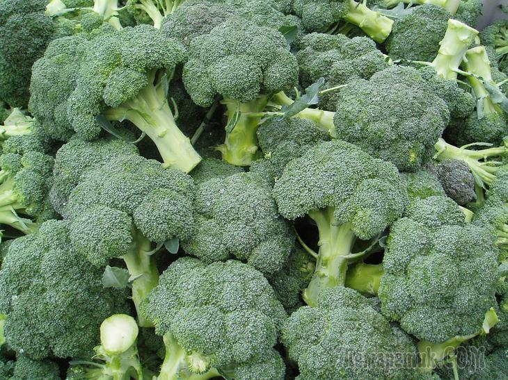 Какой уход требует капуста брокколи при выращивании