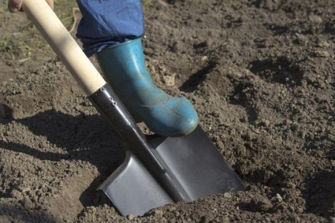 Что сажать после свеклы на следующий год: что хорошо растет после свеклы, севооборот, подготовка почвы после свеклы