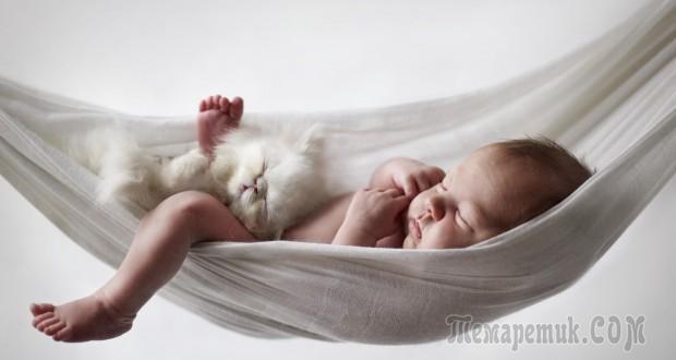 Почему коты спят на человеке