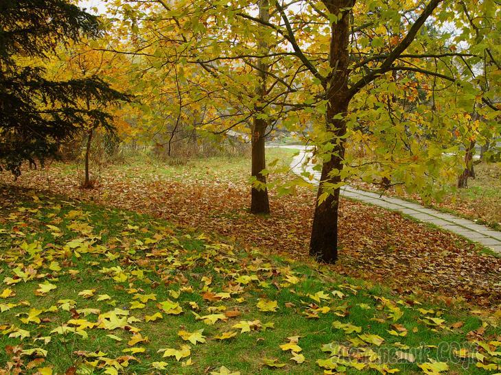 Осенняя пора – очей очарованье