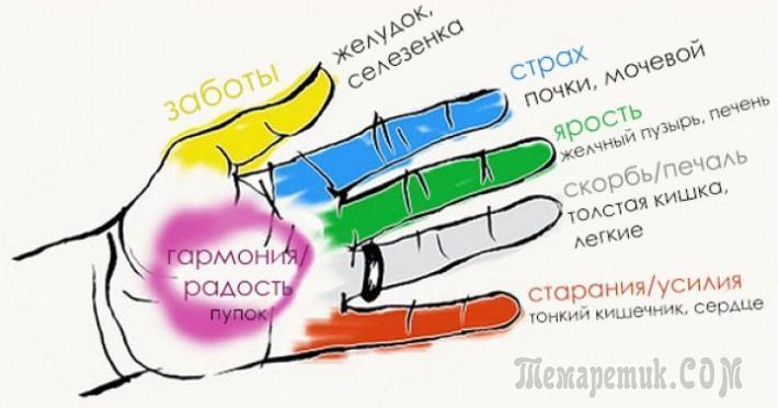Как улучшить состояние органов тела с помощью пальцев рук