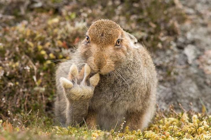 Смешные фотографии диких животных 34