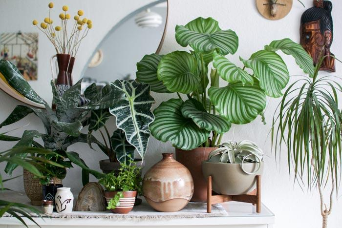 Комнатные растения с серебристыми листьями
