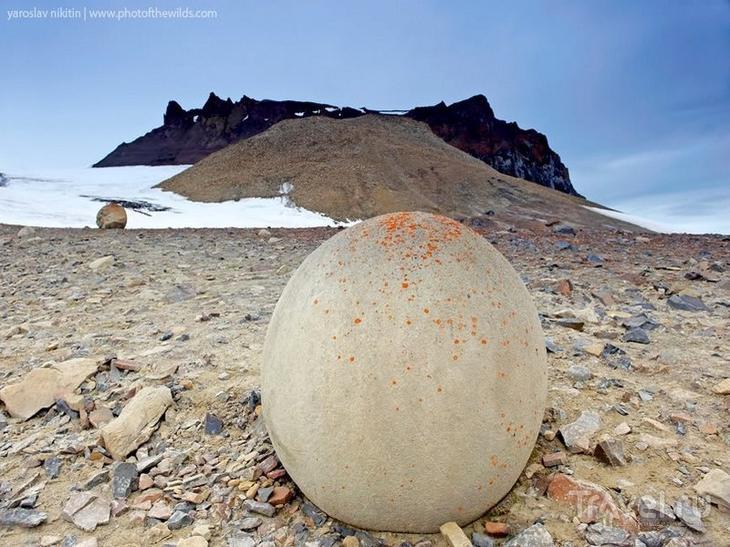 Камни острова Чамп (архипелаг Земля Франца-Иосифа) бобовины, геология, земля, камни, конкреции, чудо