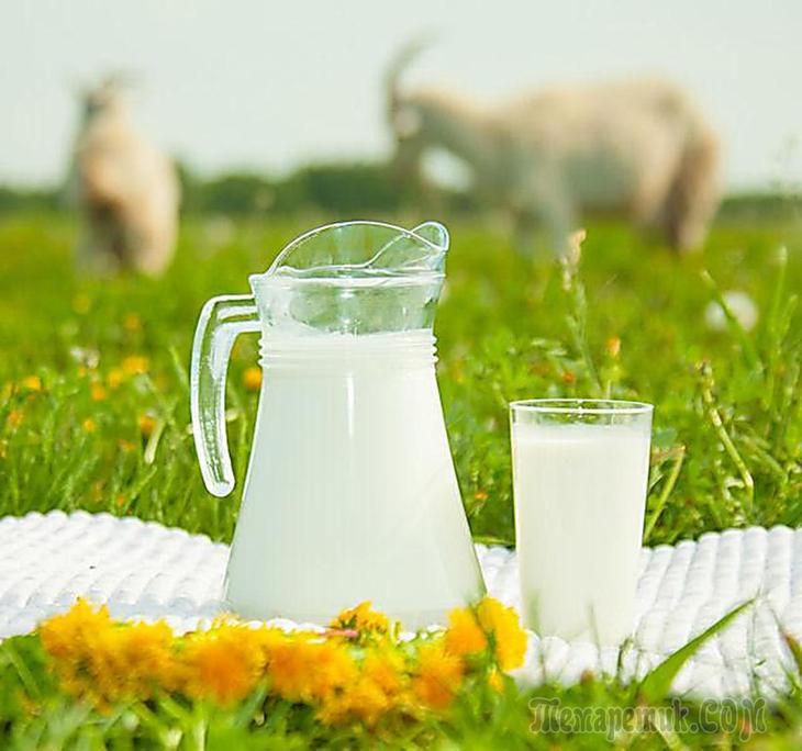 Козье молоко полезные свойства для детей