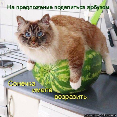 Лучшая котоматрица