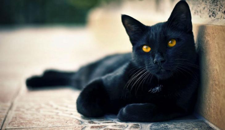 Black-Cat-990x618